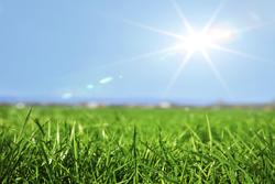 Sun Shinig On Green Grass