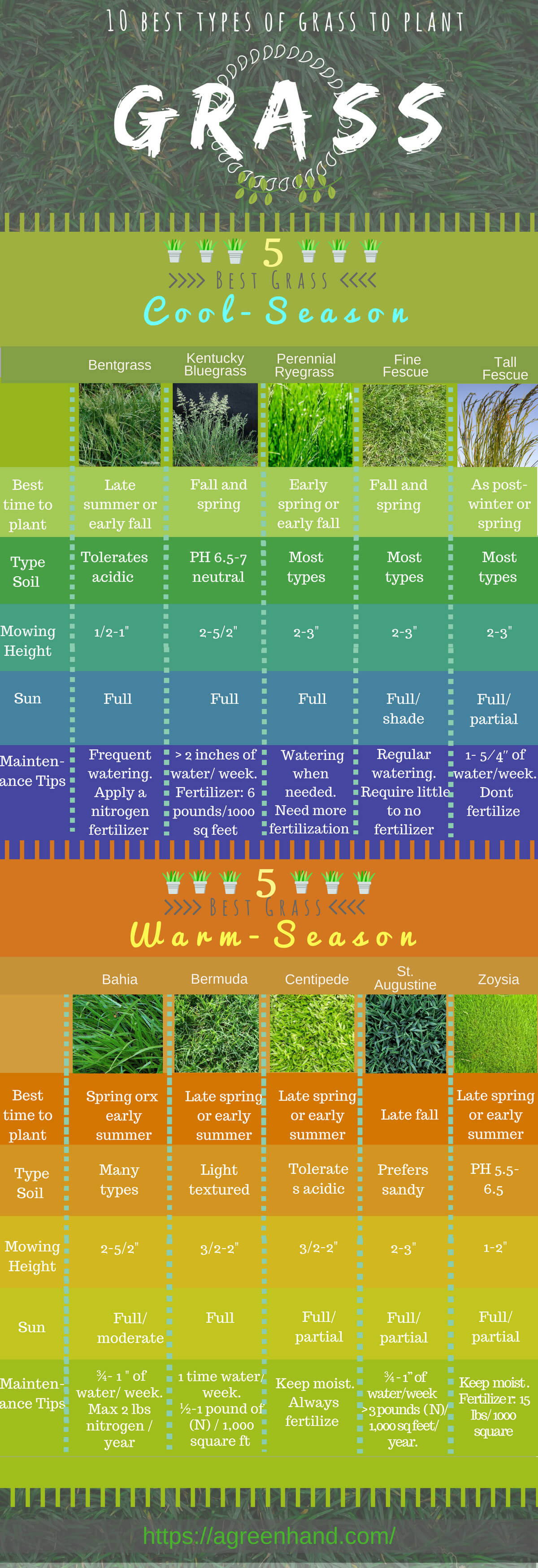 10 Popular Types of Grass to Plant in All Seasons