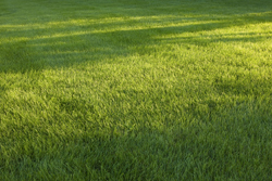 Picture Of Green Grass With Shade Marietta