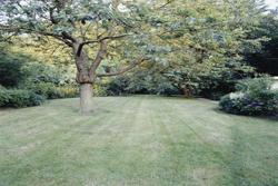 Image Of Tree In Backyard Marietta
