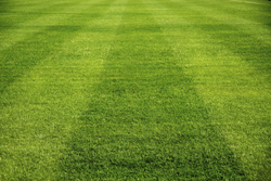 Picture Of Fresh Cut Yard