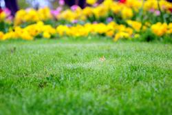 Green Grass With Yellow Flowers Marietta