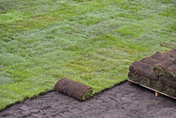 New Grass Being Rolled Out In Yard Marietta