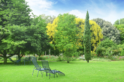 Beautiful Backyard With Green Grass Marietta