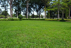 Green Grass With Trees In Yard Marietta