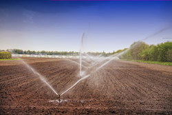 Fresh Dirt Being Watered During Day