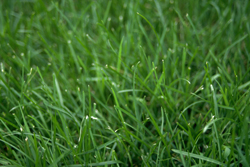 Image Of Lush Green Grass Marietta