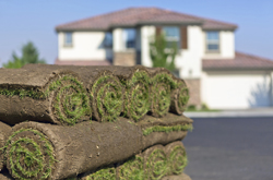 Fresh Rolled Sod In Front Of House Marietta
