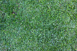 Dark Green Grass In Yard Marietta